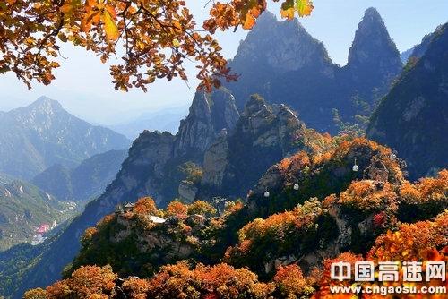 五岳寨枫叶正红